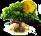 acacia_upgrade_0.png