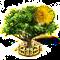 acacia_upgrade_2.png