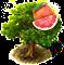 grapefruit_upgrade_0.png