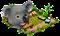 koala_workshop_0.png