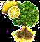 lemon_upgrade_0.png
