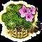 magnolia_upgrade_2.png