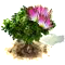 mimosa_upgrade_0.png