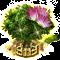 mimosa_upgrade_2.png