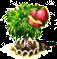 nectarine_upgrade_1.png