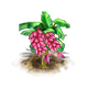 pinkbanana_upgrade_0.png