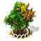 sweetgum_upgrade_1.png