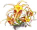 thismia_new_3.png