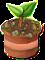 trainseedling_tree_dec18_as.png