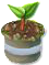 trainseedling_tree_jul17_am.png