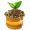 trainseedling_tree_jun19_al.png