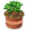 trainseedling_tree_may20_bs.png